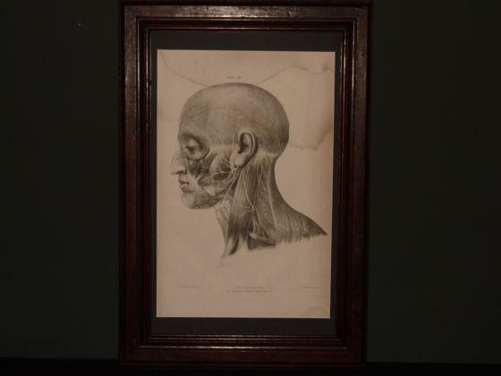 Framed Anatomical Illustration circa 1839