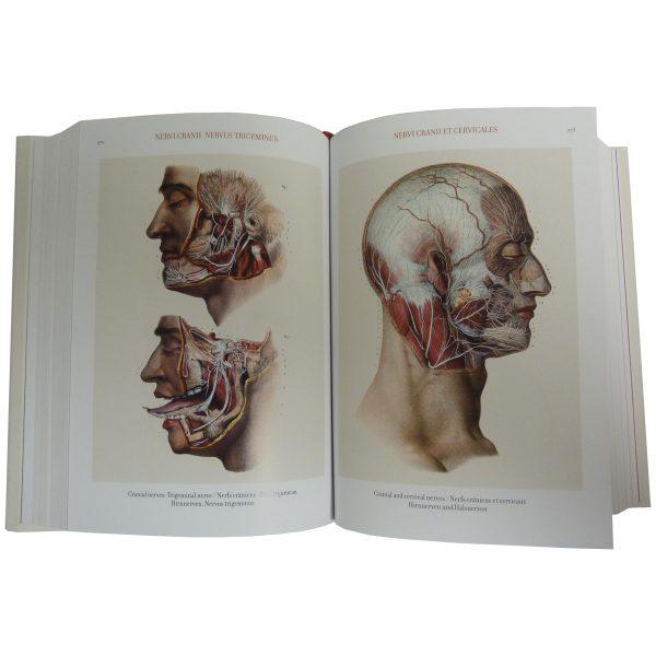 atlas-of-human-anatomy-and-surgery-cranial-nerves