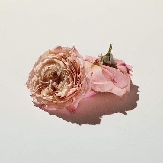 rose fragrance 101 bon parfumeur