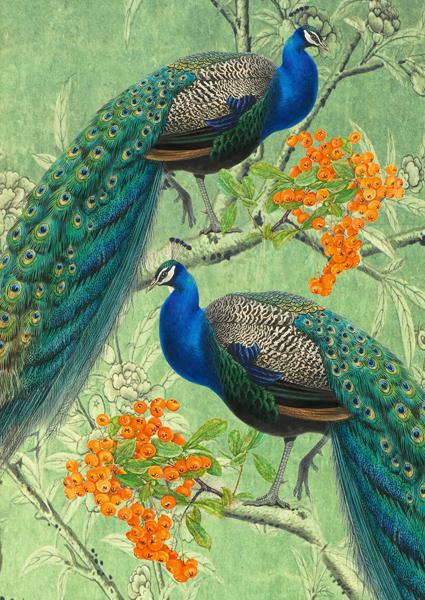 PEACOCKS-GREETINGS-CARD